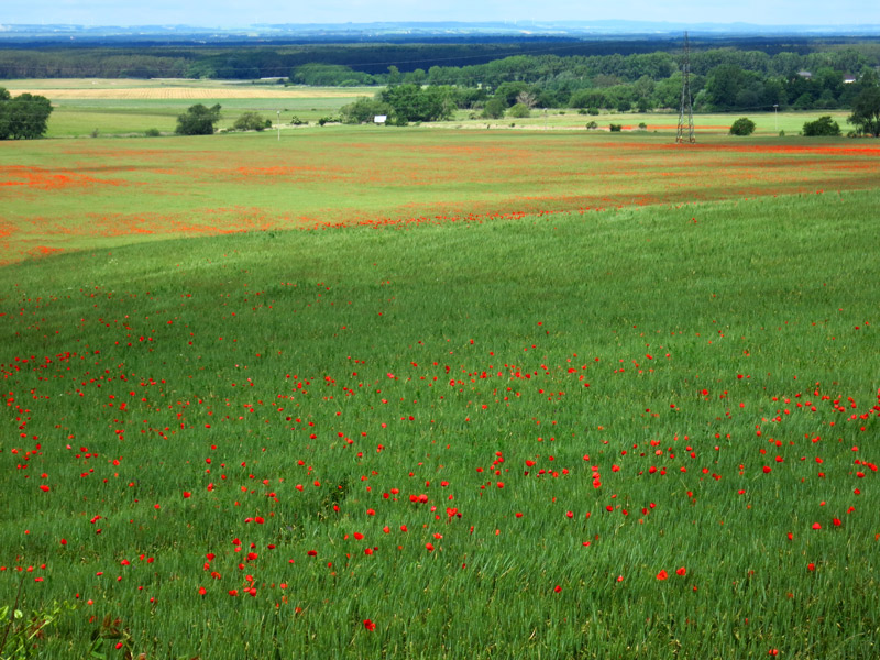 In the late spring, poppies bloom spectacularly in many Slovak fields. - Photo by Hideaway Report editor