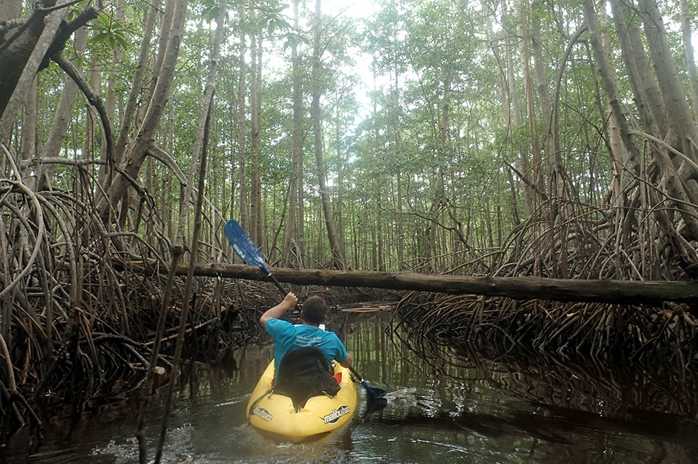Our guide, Anner, paddling through the mangroves in Marino Ballena National Park