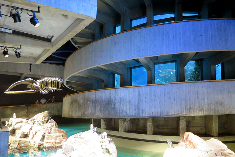 The Giant Ocean Tank at the New England Aquarium - Photo by Hideaway Report editor