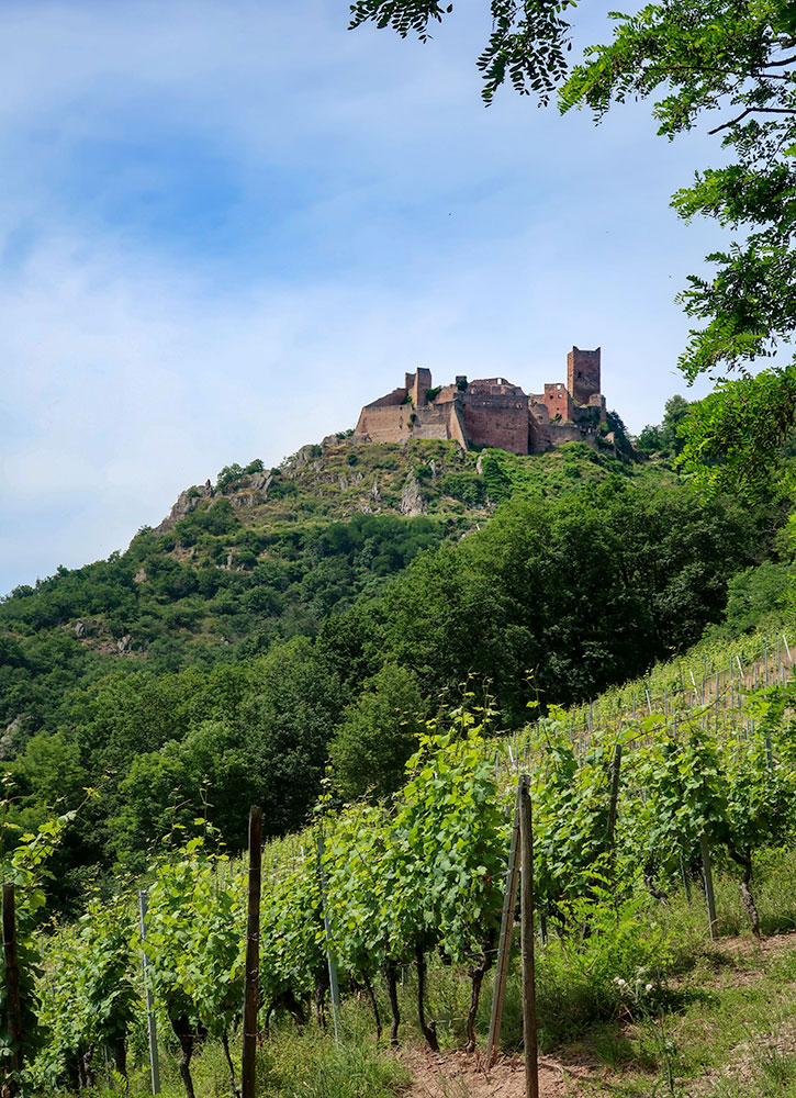 View of Château de Saint-Ulrich above the vineyards in Ribeauvillé, France - Photo by Hideaway Report editor