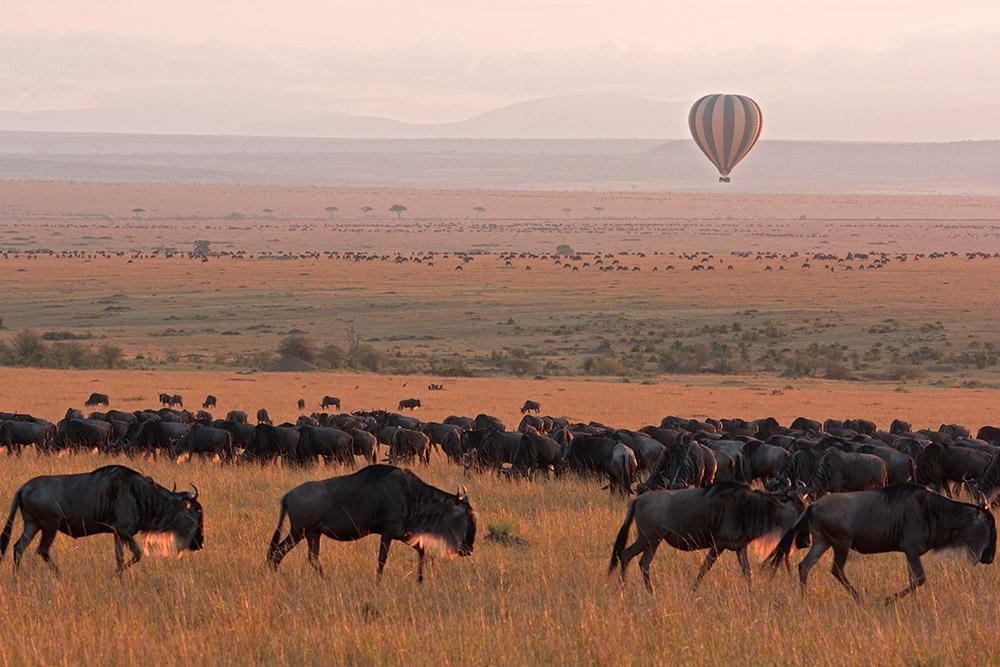 Hot air balloon and wildebeest herd at Maasai Mara
