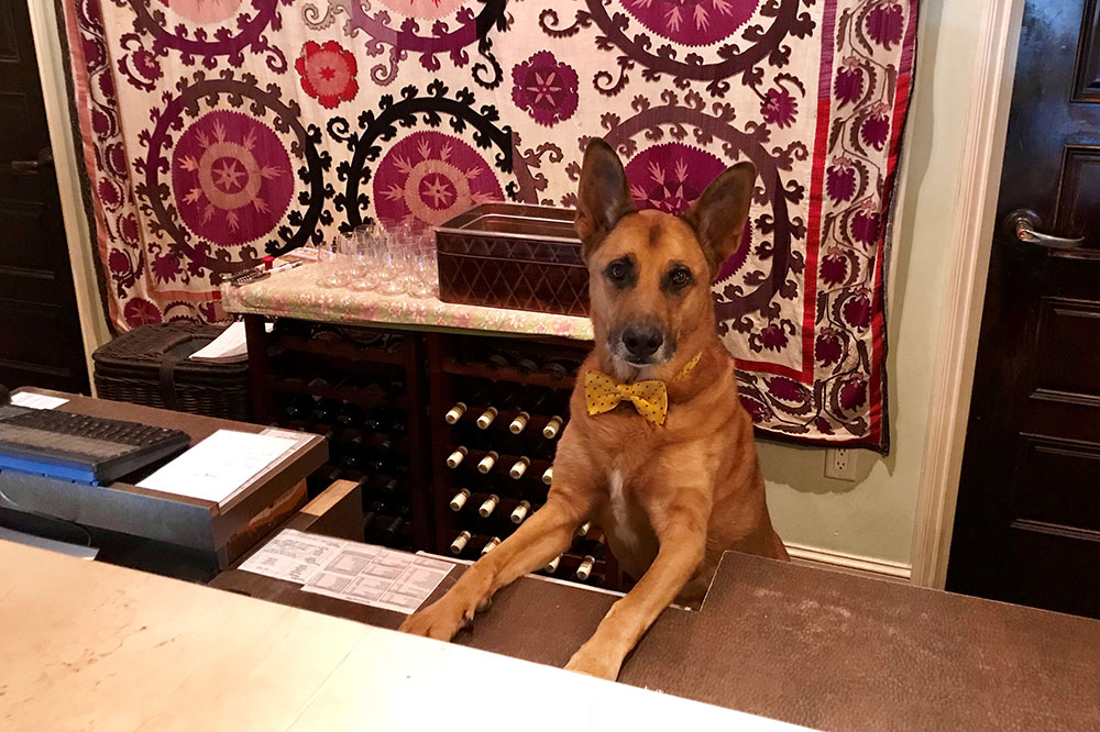 "Wiley, the ""director of pet relations,"" at Canary Hotel in Santa Barbara, California"