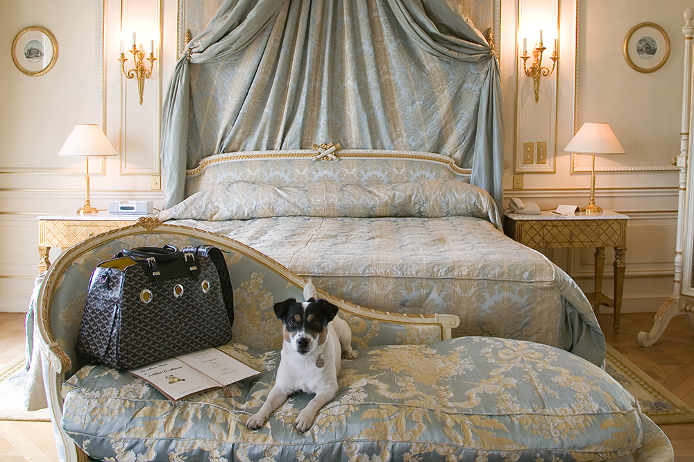 A dog guest lounging in a room at Le Meurice in Paris, France