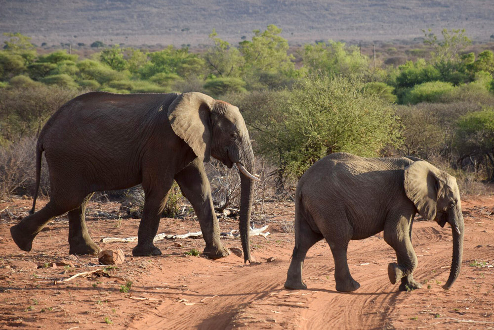 Elephants at Mateya Safari Lodge