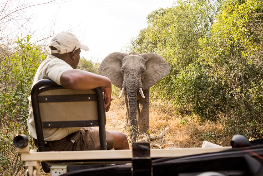 Elephant encounter in Sabi Sand, South Africa