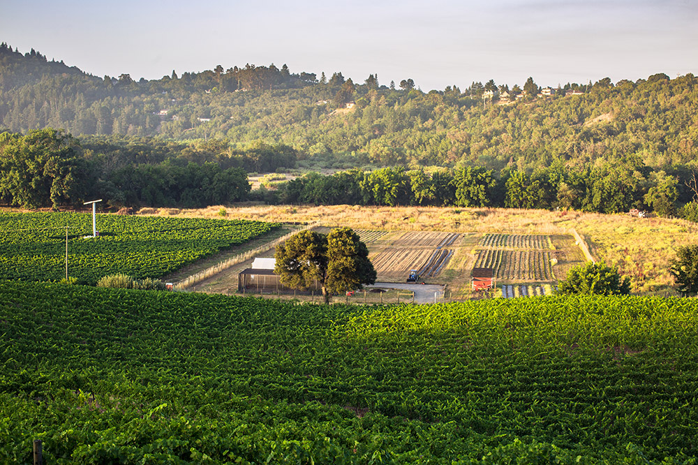 SingleThread's off-site farm, where produce is cultivated for its restaurant