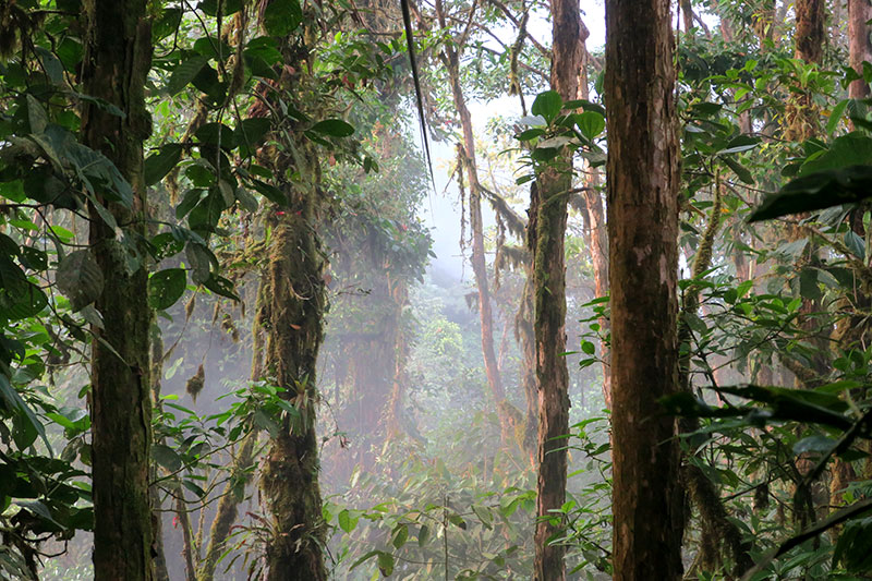 Cloud forest viewed from the Sky Bike at Mashpi Lodge - Photo by Hideaway Report editor