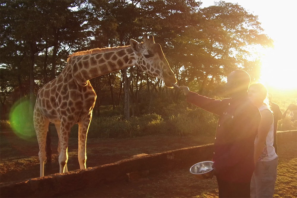 Sunset cocktails with a giraffe - Scott Dubois