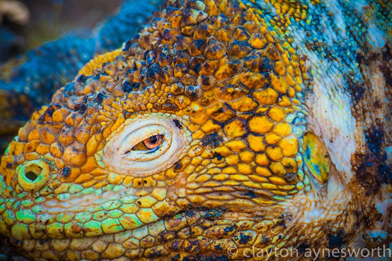 Guest Post: Clayton Aynesworth on the Galapagos Islands