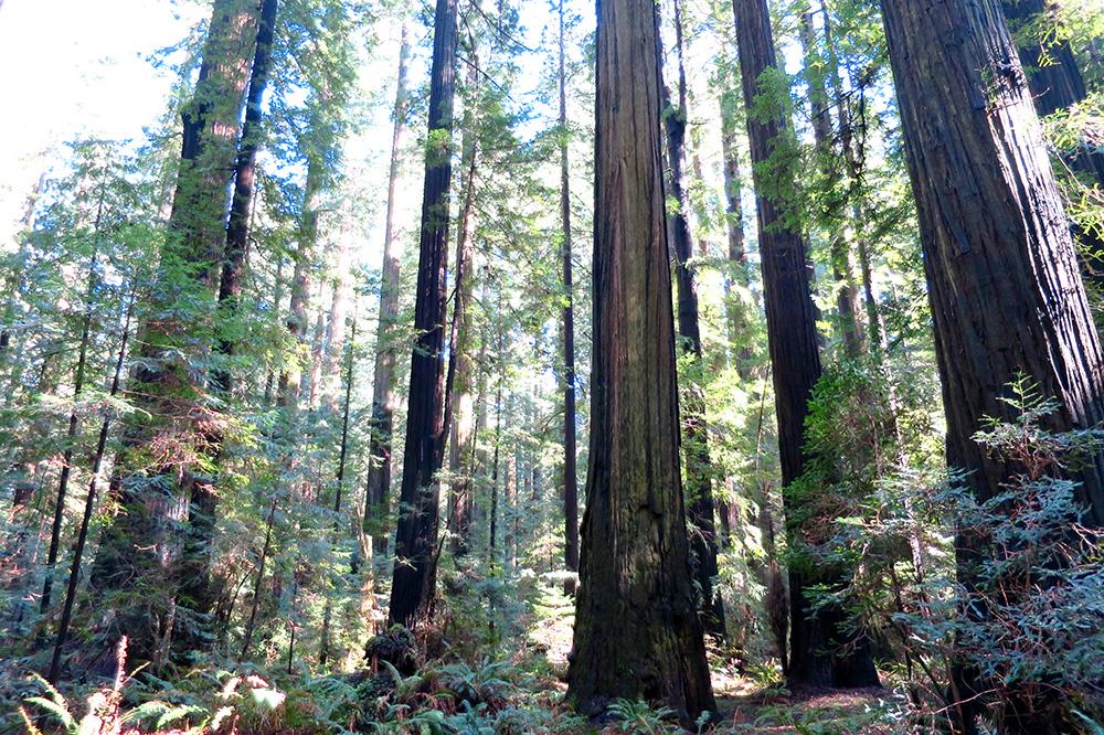 Humboldt Redwoods State Park in Weott, California
