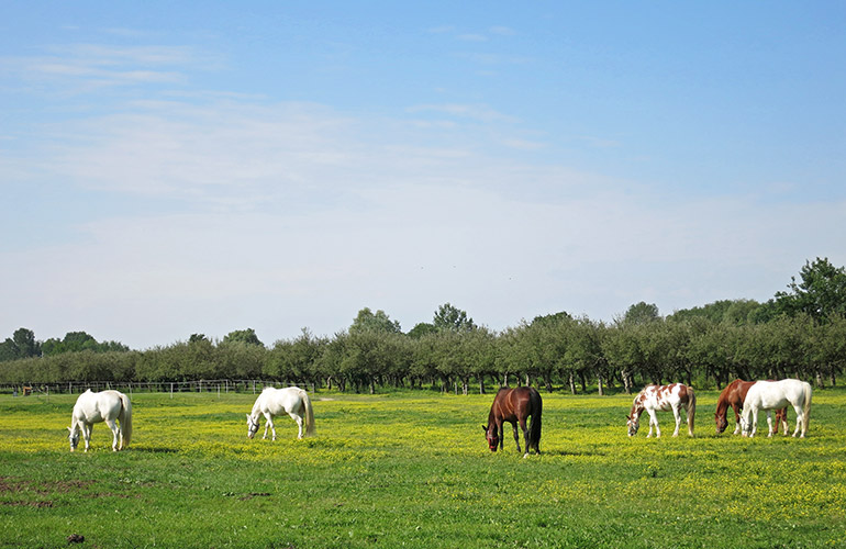 Horses grazing on the estate of Hertelendy Kastély, Hungary
