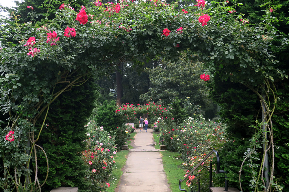 The rose arbor in the International Rose Test Garden in Portland, Oregon