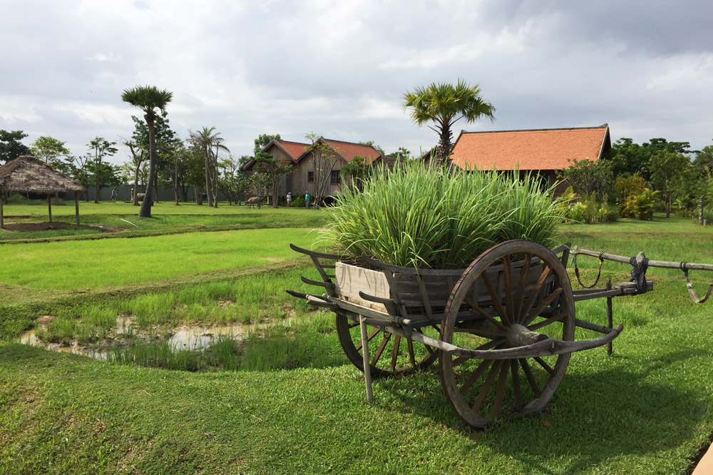 A working rice paddy on the grounds of Phum Baitang - Photo by Kristen Remeza