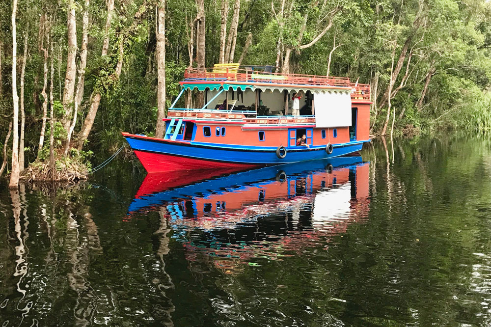 A klotok cruises the Sekonyer River