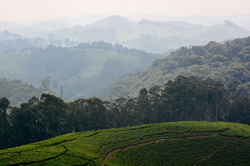 The view of the landscape in Nyungwe Forest National Park