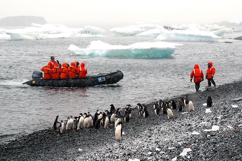Zodiac excursion to see Adélie penguins at Brown Bluff