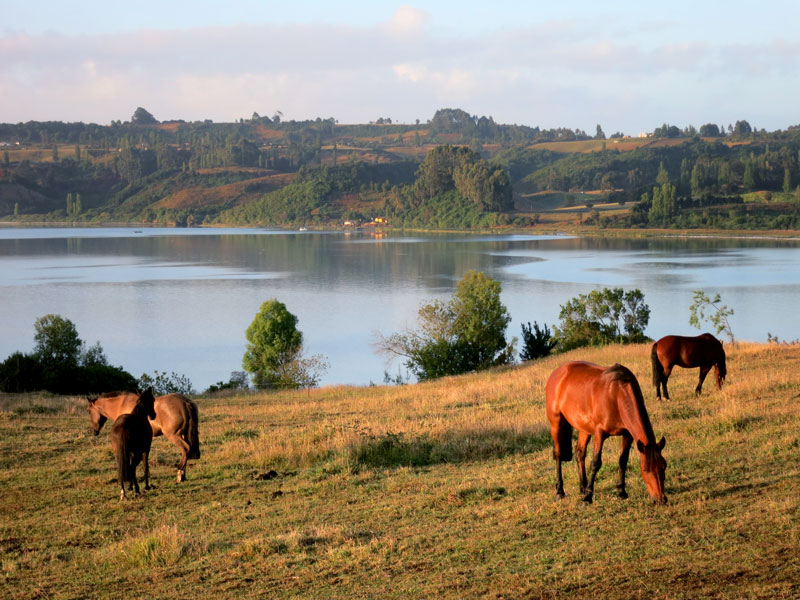 Horses grazing at Tierra Chiloé - Photo by Hideaway Report editor