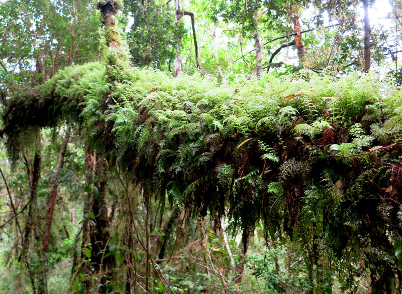 Hiking through the lush vegetation of the temperate rain forest on Chiloé Island  - Photo by Hideaway Report editor