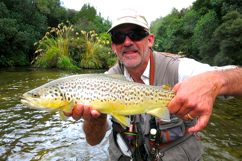 A typical brown trout from the Taharua River, New Zealand