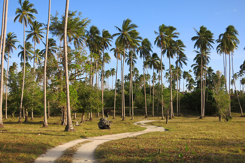 Coconut plantation at Ratua Private Island - Photo by Hideaway Report editor