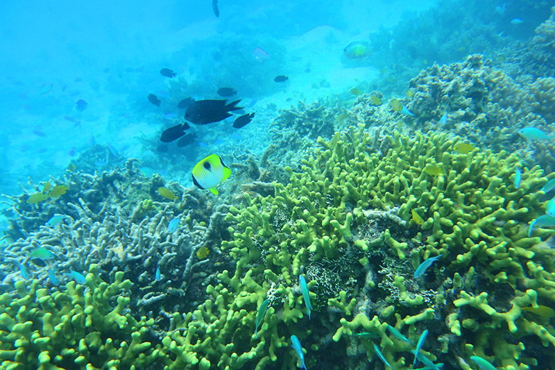 Scene from our snorkeling adventure around the reef at Ratua Private Island - Photo by Hideaway Report editor