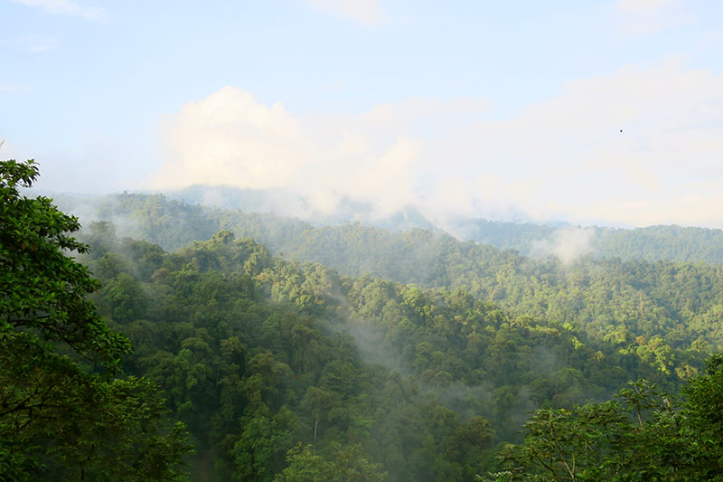 Cloud forest from the viewing platform at Mashpi Lodge - Photo by Hideaway Report editor
