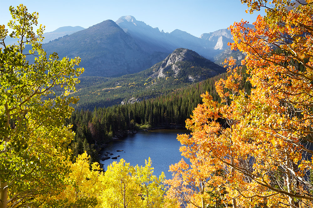 Aspen trees in full autumn color at Bear Lake in Rocky Mountain National Park