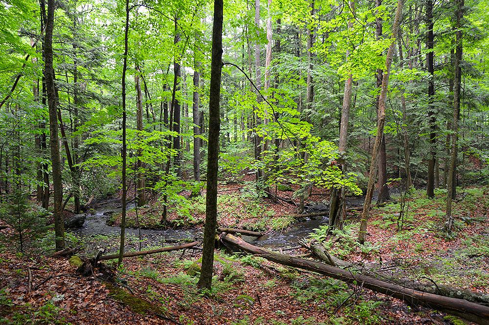 Pleasant Valley Wildlife Sanctuary
