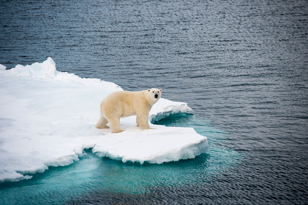 A polar bear walking on ice in the Arctic