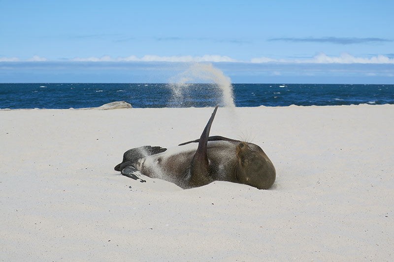 Sea lion on Mosquera Island - Photo by Hideaway Report editor