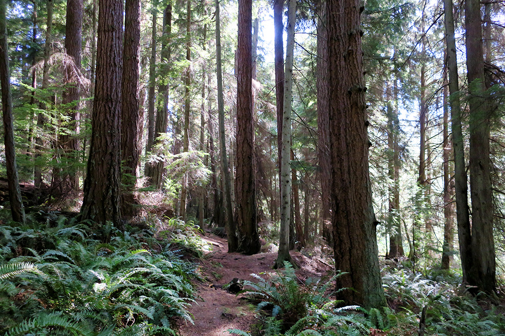 Wilbert Trail in South Whidbey State Park in Freeland, Washington