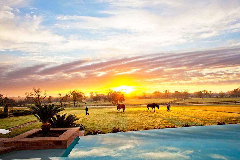 Horses at sunrise on the grounds of The Inn at Dos Brisas