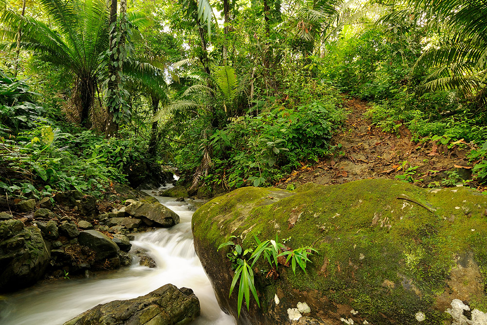 A jungle scene from the rain forest of Panama