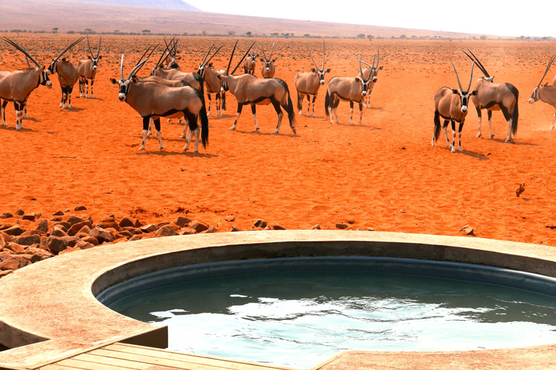 Orynx at Wolwedans, Namibia